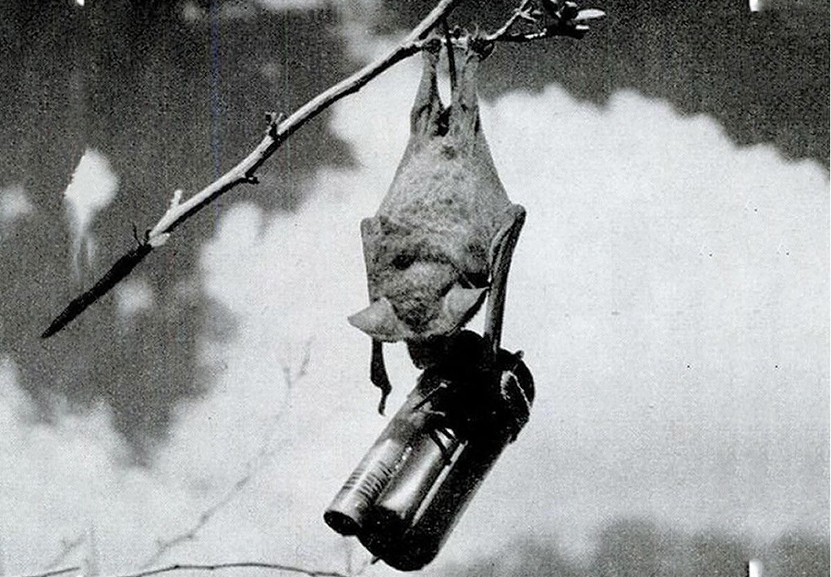 Bat incendiary devices were tested in WWII